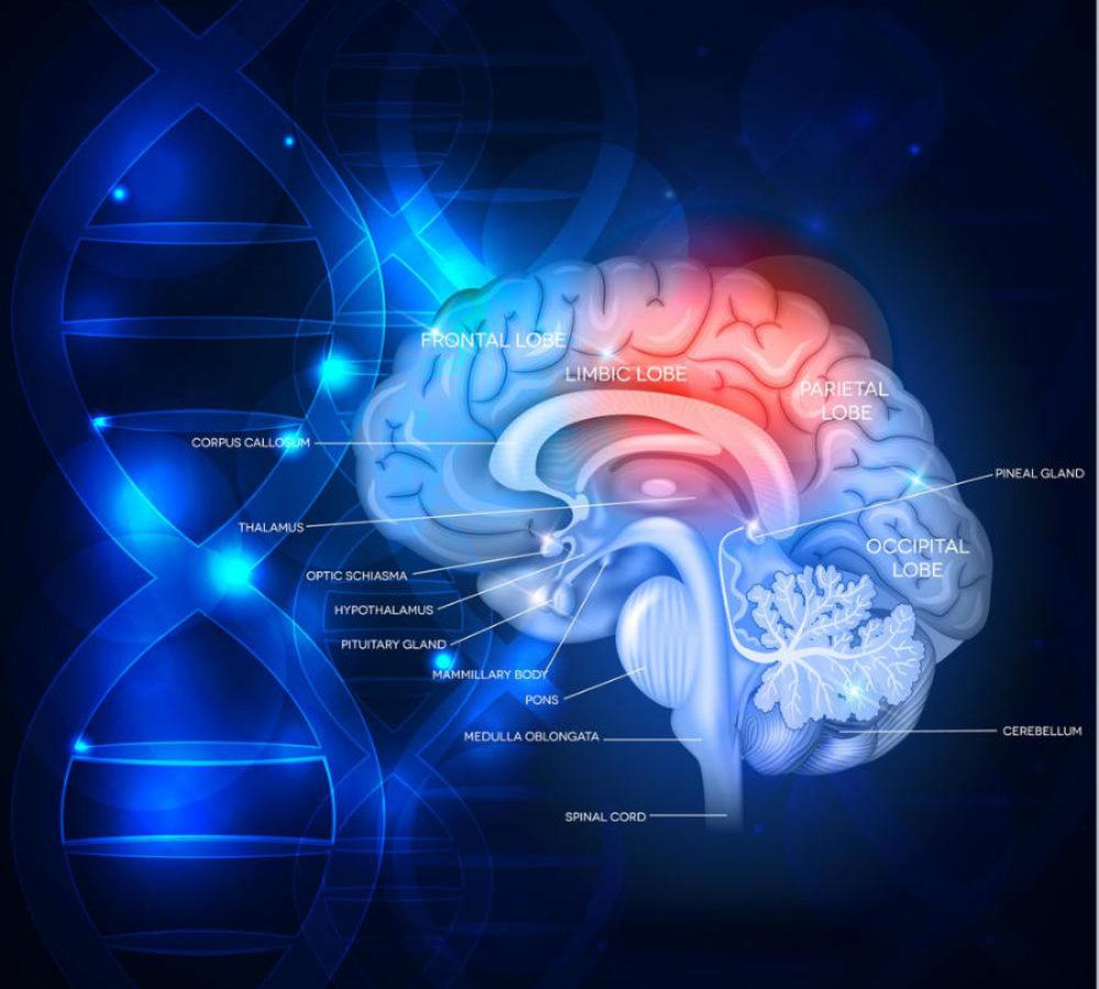 Εγκεφαλικό επεισόδιο: Από τη βλάβη ως την πραγματικότητα στο σπίτι